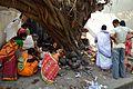 Ficus religiosa Puja - Sibpur - Howrah 2012-10-20 0866.JPG