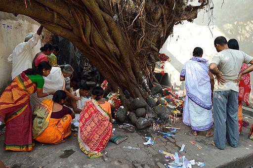 Ficus religiosa Puja - Sibpur - Howrah 2012-10-20 0866