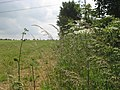 Field edge boundary West Littleton Down - geograph.org.uk - 1374224.jpg