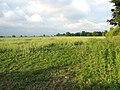Field north of Surlingham Lane - geograph.org.uk - 1344262.jpg