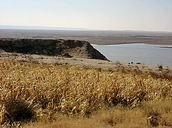 Fields of corn-Euphrates-Iraq.jpg