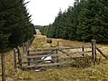 Firebreak, Stell Bush Edge - geograph.org.uk - 762235.jpg