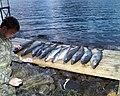 Fishing Norway - panoramio.jpg