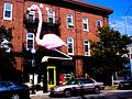 Flamingo at Cafe Hon, Baltimore.jpg