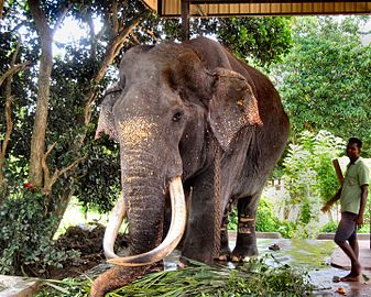 Flickr - ronsaunders47 - ELEPHANTS UP CLOSE 8.jpg