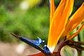 Flower (39017435995).jpg