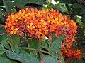 Flower 12082011245.JPG