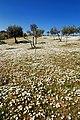 Flower field (425624010).jpg