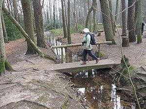 Creekmoor - Upton Heath woodland on the western border of Creekmoor