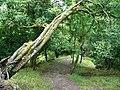 Footpath Mill Gill Woods, near Askrigg - geograph.org.uk - 447278.jpg
