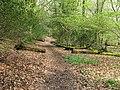 Footpath climbing through Access land in Hammonds Wood - geograph.org.uk - 1258403.jpg