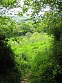 Footpath to Littlecombe - geograph.org.uk - 1319829.jpg