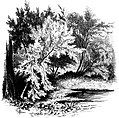Forest Hymn pg 35b.jpg