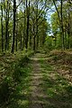 Forest of Dean - geograph.org.uk - 1303257.jpg
