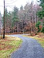 Forestry road in Wyre Forest - geograph.org.uk - 654294.jpg