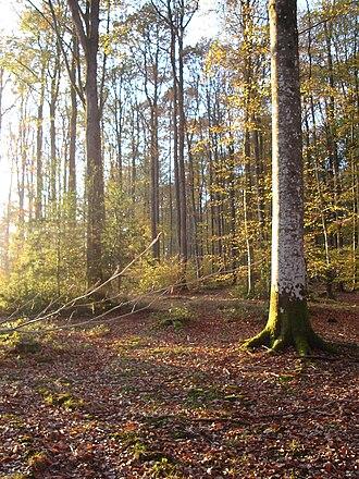 Centre-Val de Loire - Forest in Eure-et-Loir, Centre