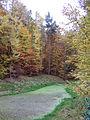 Foret de Soignes, 2007-11-04-9.jpg