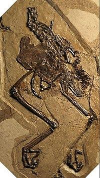 Fossil-AvimaiaSchweitzeraeWithUnlaidEgg