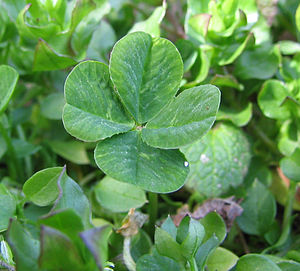 Luck - A four-leaf clover is often considered to bestow good luck.