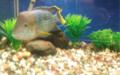 Fresh water fish bangalore aquarium, india.png