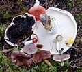 Fungi selection - Flickr - gailhampshire.jpg