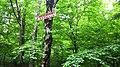 Góra Niedżwiadki - panoramio.jpg