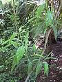 Gardenology.org-IMG 0670 rbgs10dec.jpg