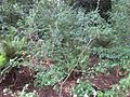Gardenology.org-IMG 2314 rbgs11jan.jpg