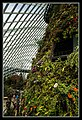 Gardens by the Marina Bay - Dome Clouds-10 (8323407968).jpg