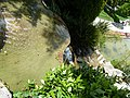 Gardens of the villa ephrussi rothschild 014.jpg