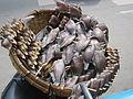 Getrockneter Fisch Markt in Thailand.JPG