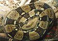Gfp-boa-constrictor.jpg