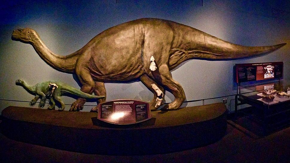 Glacialisaurus FMNH
