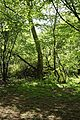 Glade in Hatfield Forest Essex England.jpg