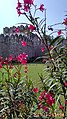 Golconda Fort from behind flower plant unique pic.jpg