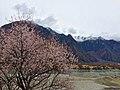Gongbo'gyamda, Nyingchi, Tibet, China - panoramio (16).jpg
