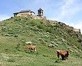 Gorijvari - cows.jpg