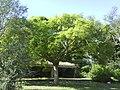 Gran arbre - panoramio.jpg