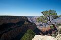 Grand Canyon (8052502787).jpg