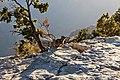 Grand Canyon Observant Squirrel.jpg