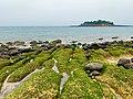 Green Reef.jpg
