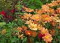 Green Spring Gardens in October (22373098037).jpg