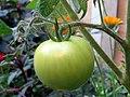 Green Tomato.jpg