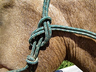 A modified sheet bend with the end falling away from the horse's head is used to secure a rope halter that lacks buckles Green rope halter knot.JPG