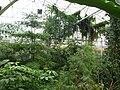 Greenhouse in Botanical garden in Teplice.jpg