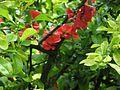 Grishko botanical garden-5.jpg