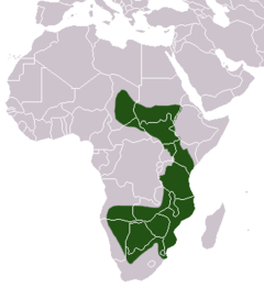 Ground Pangolin area.png
