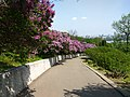 Gryshko botanical garden (May 2018) 04.jpg