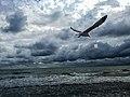 HDR image of Hrybiuk Ruslan, The sea in the Zaliznyy Port, Kherson region, Ukraine.jpg