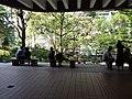 HKU 香港大學 Sun Yat-Sen Lotus pool tree April 2019 SSG 04.jpg